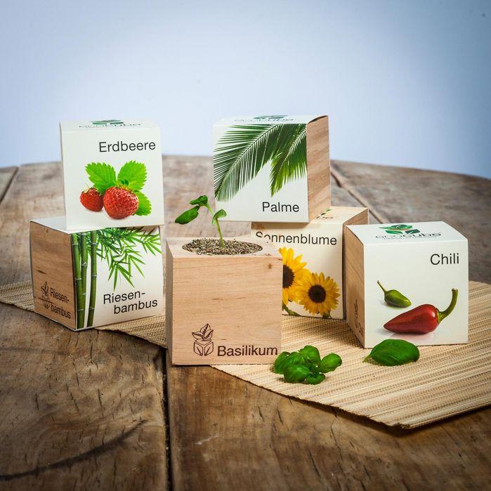 Piante in cubi di legno - Troppotogo
