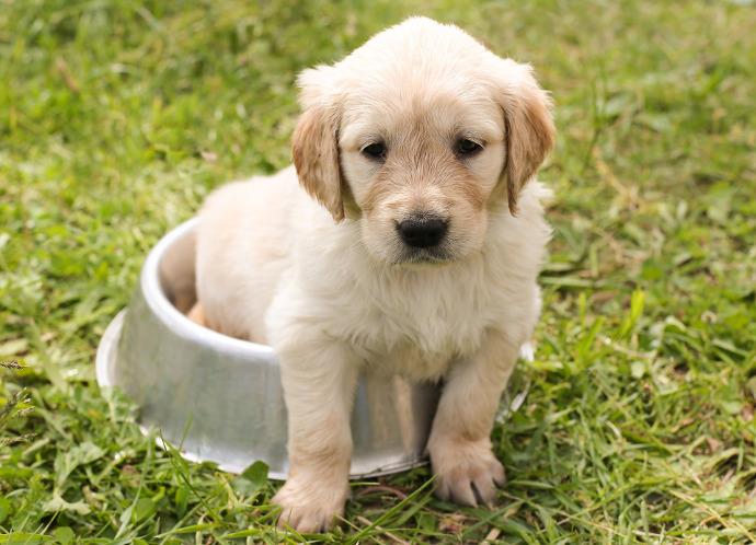 I Nomi Per Cani Delle Star